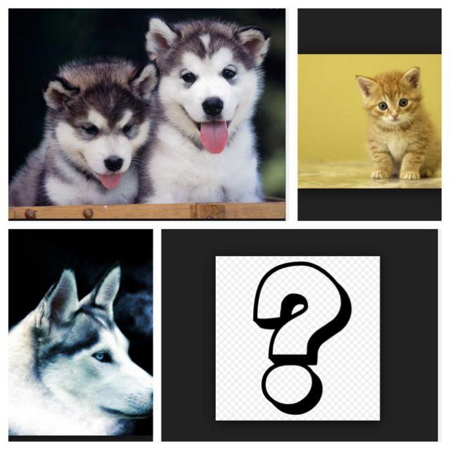 Question%2f4882-0-question-84dcf0ae-81b9-4621-88e3-e169e5501efb